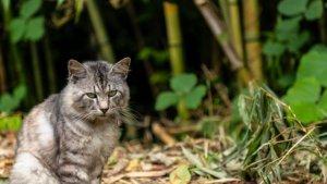 竹やぶと猫