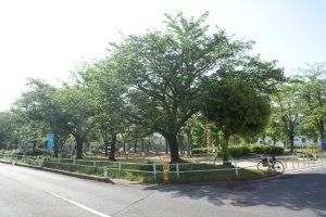 park of Minamihanashima