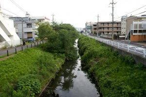 新坂川富士見橋近辺