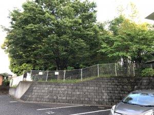 竹ケ花雷電湧水敷地奥の上部樹木