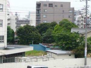 江戸川から見た平潟神社風景